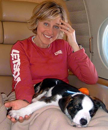 Ellen Degeneres and Oakland the Border Collie