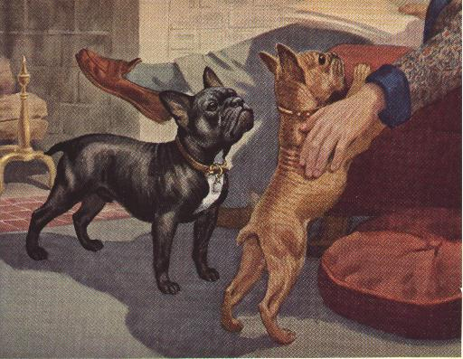 Historical Antique French Bulldog Photographs Part One