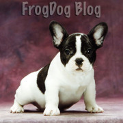 FrogDog Blog on Bullmarket French Bulldogs